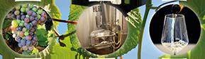 Diplom-Önologie: Top aktuelles Wissen für die Weinwirtschaft