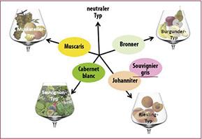 Der österreichische Wein mit seinen PiWi Sorten