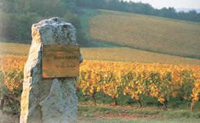 Chablis & Burgund - Teil 1