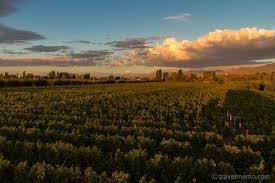 Weinherbst in Argentinien und Chile